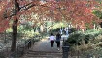 Central Park Walkway People zoom