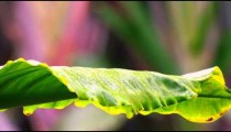 Static shot of beautiful yellow bellied bird moving on leaf petal.