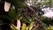 Bank plants in Jardim Botanico, Rio