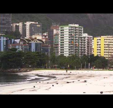 A flock of pigeons along the coast in Rio de Janeiro, Brazil