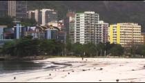 Pigeons walking along the seashore in Rio de Janeiro, Brazil