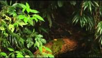 Racking focus jungle footage