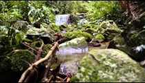 Tracking footage of a jungle waterfall