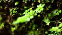 Close-up pan of dense vegetation in Rio de Janeiro forest.