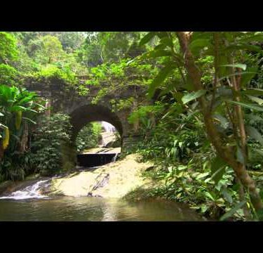 Tracking shot of a jungle stream and waterfall as seen through a stone bridge