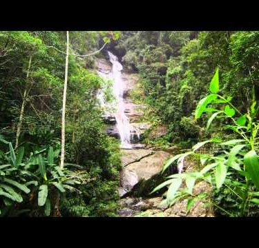 Tracking shot of a small tree and waterfall in a jungle.