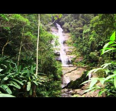 Tracking shot of jungle tree, waterfall