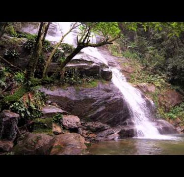 Tracking shot of a jungle cascading down a dark rocky outcropping into a dark green pool.