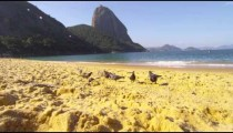 Slow motion of birds on beach sand in Rio.