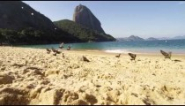 Slow motion of birds flying from Red Beach's sand in Rio.