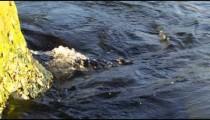 Static shot of dark water rolling over rough boulders.